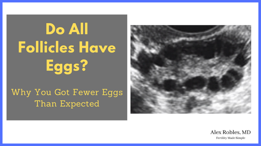 do-all-follicles-have-eggs