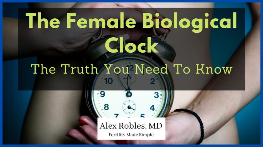 the-female-biological-clock